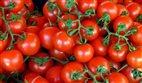 Türk domatesine yasak sürecek